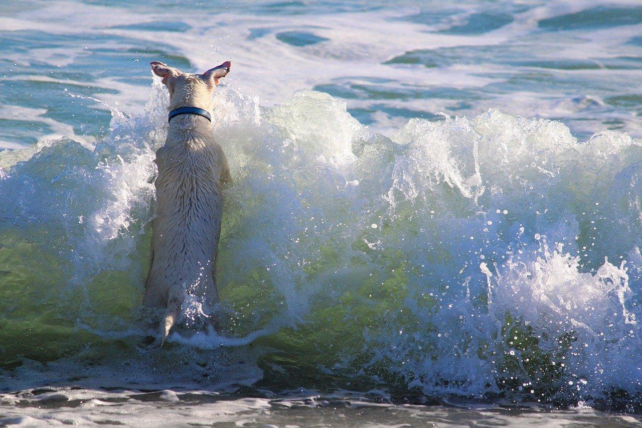 Al mare con animali a San Mauro Mare